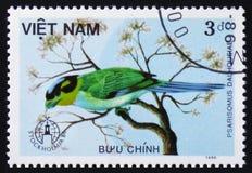 Vogel Psarisomus-dalhousiae, Reihentiere, circa 1986 Lizenzfreies Stockbild