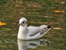 Vogel in rhewater stock foto's