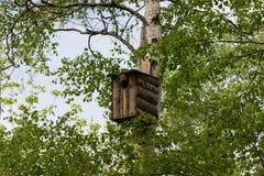 Vogel ` s Haus auf der Birke lizenzfreie stockfotos