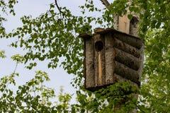 Vogel ` s Haus auf der Birke lizenzfreies stockbild