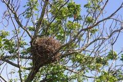 Vogel `s Nest Stockfoto