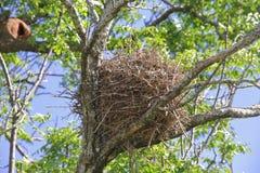 Vogel `s Nest Lizenzfreie Stockfotos