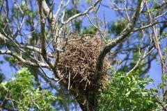 Vogel `s Nest Lizenzfreies Stockfoto