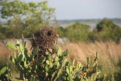 Vogel `s Nest Lizenzfreie Stockfotografie