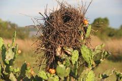 Vogel `s Nest Lizenzfreie Stockbilder