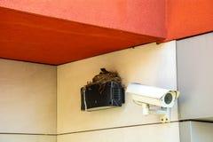 Vogel ` s Nest auf der Videokameraspurhaltung Lizenzfreie Stockfotos