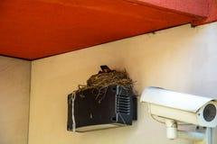 Vogel ` s Nest auf der Videokameraspurhaltung Lizenzfreies Stockbild