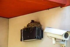 Vogel ` s Nest auf der Videokameraspurhaltung Lizenzfreie Stockfotografie