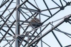 Vogel ` s Nest auf einer Stromleitung Unterstützung Stockbild
