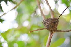 Vogel ` s Nest formte wie eine Schale auf einer Niederlassung Lizenzfreie Stockfotografie