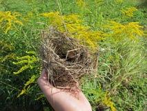 Vogel` s nest in mijn hand stock fotografie