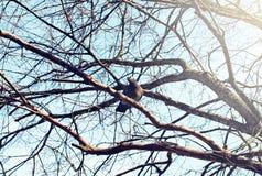 Vogel` s nest tegen hemel op de naakte boom Stock Afbeelding