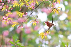 Vogel saugt Nektar von den Blumen stockfotos