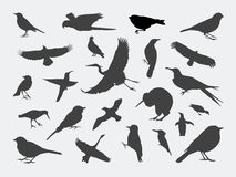 Vogel-Schattenbilder Lizenzfreies Stockfoto