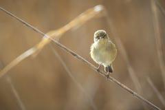 Vogel schaut zur Kamera lustig Stockbild