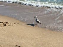 Vogel sieht Sand auf dem Strand Stockbild