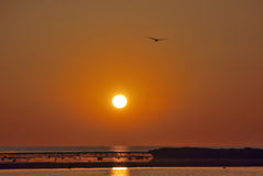 Vogel in Sonnenuntergang lizenzfreie stockbilder