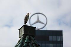 Vogel in stad Stock Afbeelding