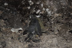 Vogel starb im Feuer der Erstickung Stockfotos
