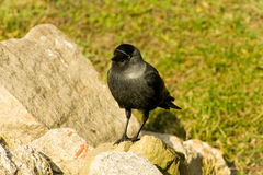 Vogel status royalty-vrije stock afbeelding