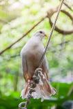 Vogel tauchte auf dem Dach Lizenzfreie Stockbilder