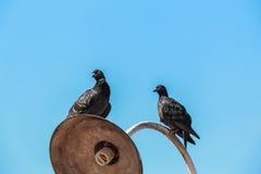 Vogel in Thailand Lizenzfreie Stockfotografie