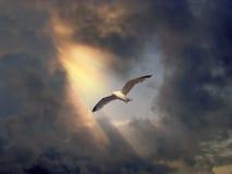 Vogel tijdens de vlucht Royalty-vrije Stock Afbeelding