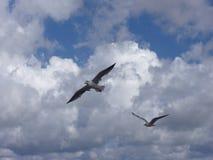 vogel tijdens de vlucht 1 Royalty-vrije Stock Foto's