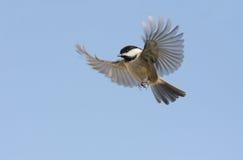 Vogel tijdens de vlucht Stock Foto's