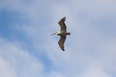 Vogel tijdens de vlucht Royalty-vrije Stock Foto's