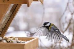 Vogel tijdens de vlucht Royalty-vrije Stock Foto