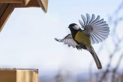 Vogel tijdens de vlucht Stock Afbeeldingen