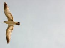 Vogel tijdens de vlucht - presentatieachtergrond Stock Fotografie
