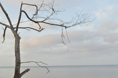 Vogel und Baum Lizenzfreies Stockfoto