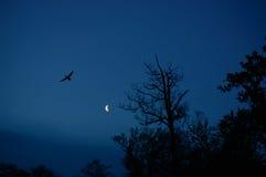 Vogel- und Baumschattenbild mit dem Mond in der Rückseite Lizenzfreies Stockfoto