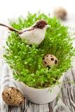 Vogel und Eier auf der Kresse Lizenzfreie Stockfotos