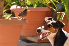 Vogel und Hund Stockfoto