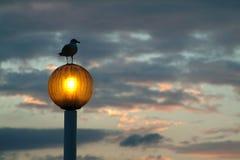 Vogel und Kerze Stockfotografie