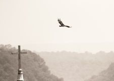 Vogel und Kirche Stockfoto