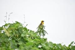 Vogel und Nest Lizenzfreie Stockbilder