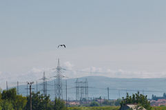 Vogel und Strommaste Lizenzfreie Stockfotos