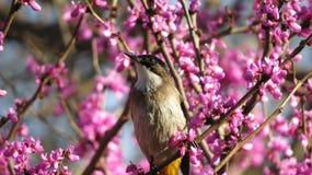 Vogel unter Blumen Lizenzfreies Stockfoto