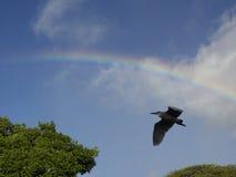 Vogel unter Regenbogen stockfotografie