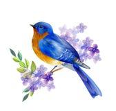 Vogel van de Lentevector royalty-vrije illustratie