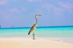 Vogel 4 van de Maldiven Makana Stock Afbeelding