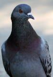 Vogel van de wereld Royalty-vrije Stock Afbeelding