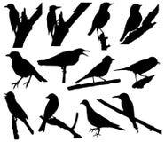 Vogel Vectorsilhouetten Royalty-vrije Stock Afbeeldingen