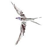 Vogel (Vektor) Lizenzfreie Stockbilder