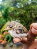 Vogel in verschillende kleuren stock afbeelding