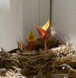 Vogel in verschillende kleuren Stock Afbeeldingen